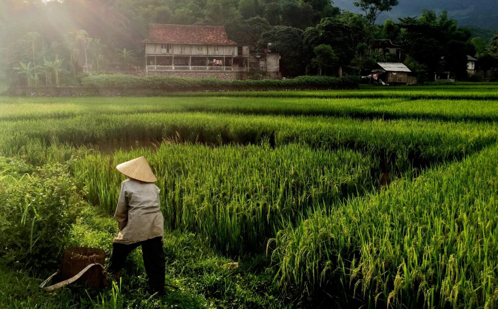 ベトナムで海外ボランティア